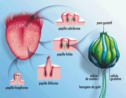 Causes du goût du métal dans la bouche